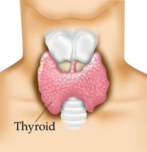 Thyroid Health in Chandler