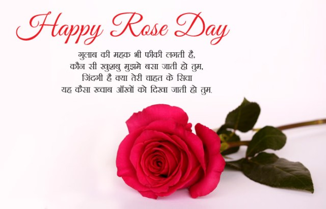 Gulab Shayari with Images - 7th Feb Happy Rose Day Images with Shayari
