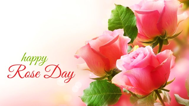 Happy Rose Day Pink Flowers