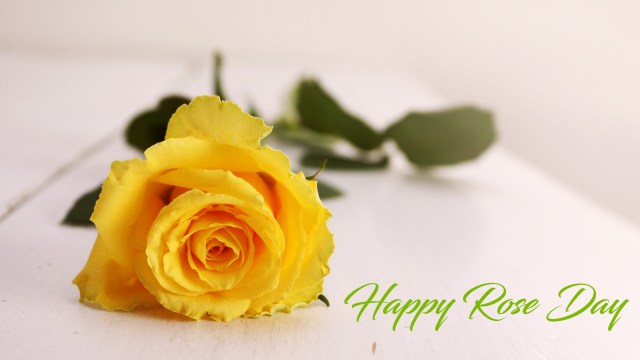 Yellow Rose Day Images for Friendship