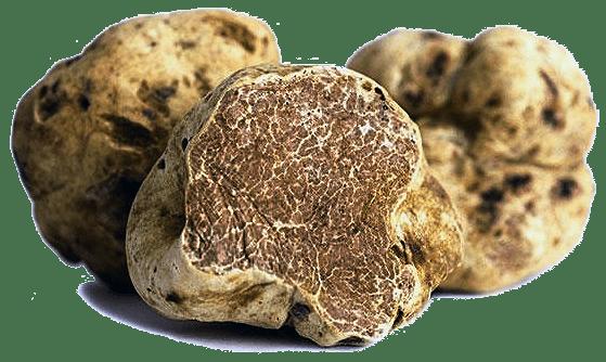 Fresh White Truffles byTruffle Guys