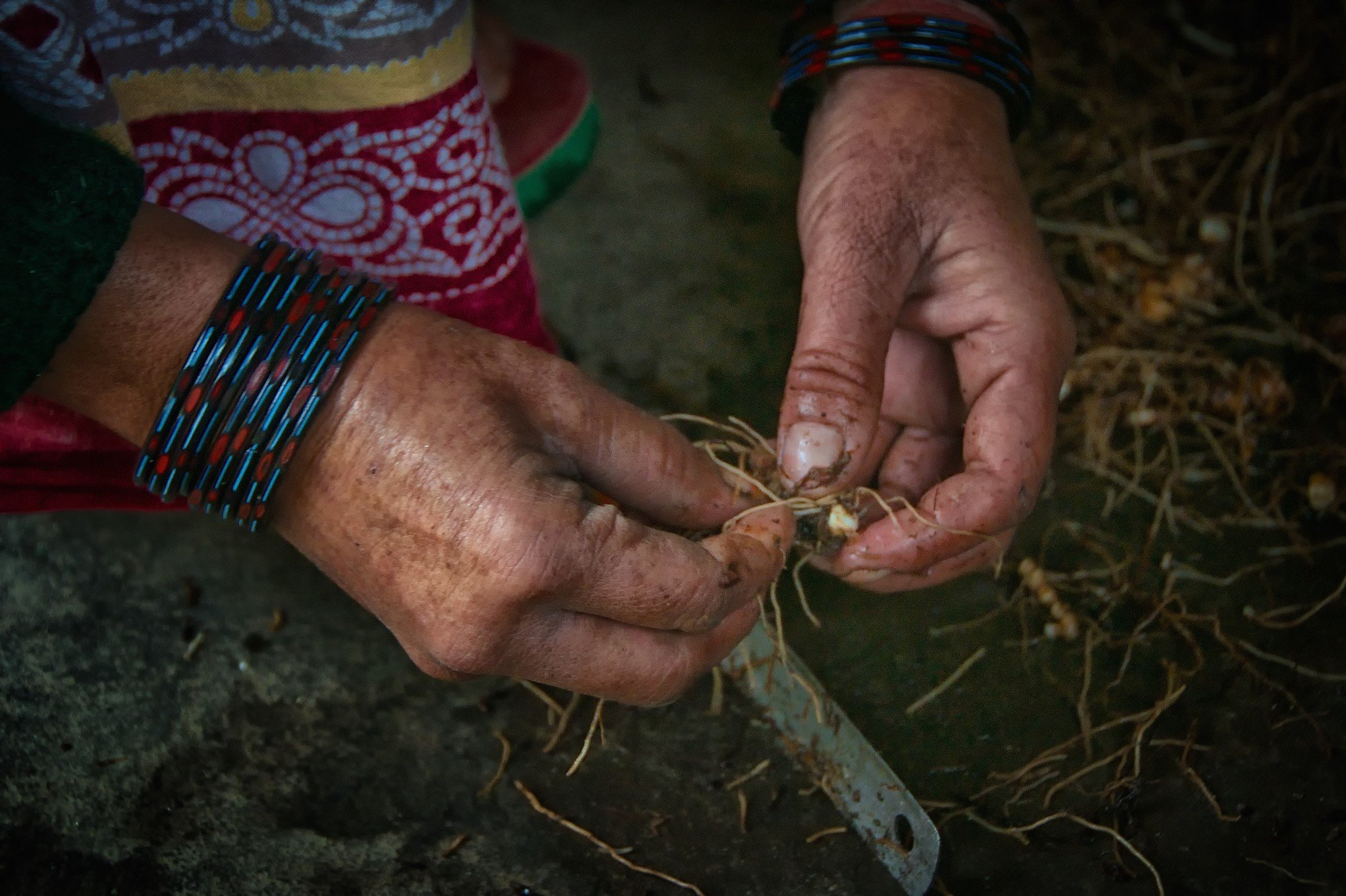Trimming tumeric for later resale in Dwali.