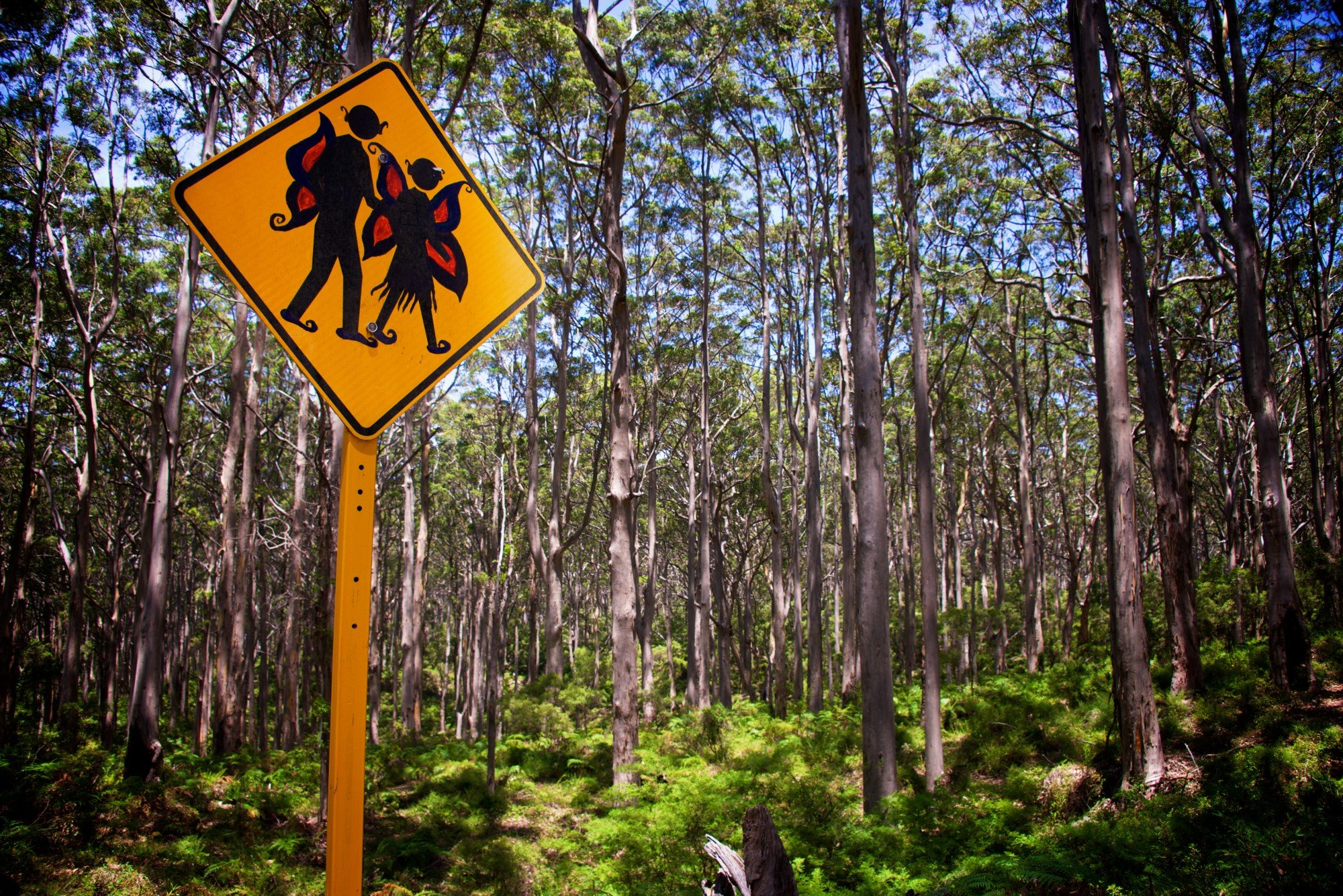 On the road from Perth to Sydney, We came upon this fairy forest… and a wit who changed the sign