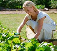 No dig gardening and seasonal planting