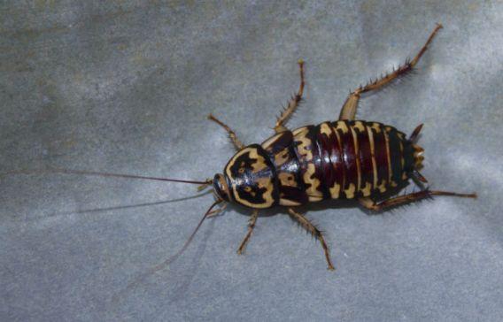 how to keep roaches away while you sleep
