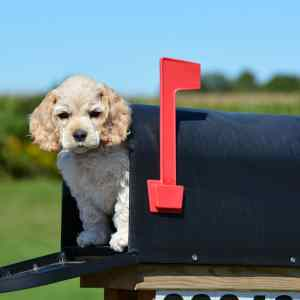 Nashville trademark lawyer dog