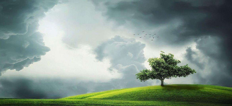 tree-832079_1280