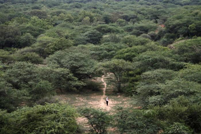 An Indian man walks down a path in a cle