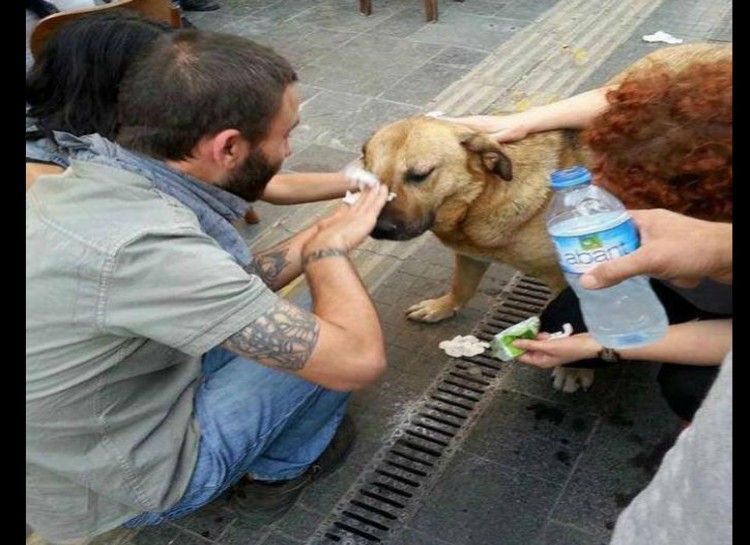 18. Turkish protestors help a dog from tear gas.