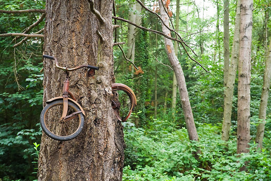 The tree swallows a bike on the island Vachon in Washington, USA