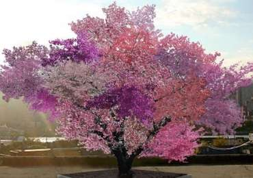 Trees produce 40 kinds of fruit simultaneously