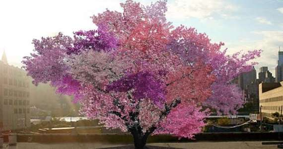 There Are Some Trees That Produce 40 Kinds Of Fruit Simultaneously.