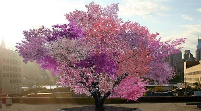 tree that produce 40 fruits