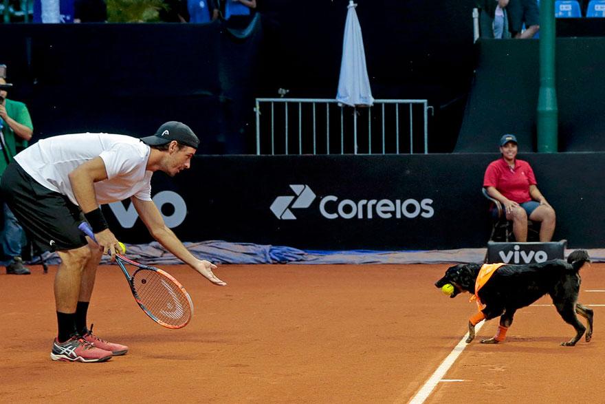 Brazil Open Tennis Tournament-ball-dogs-2
