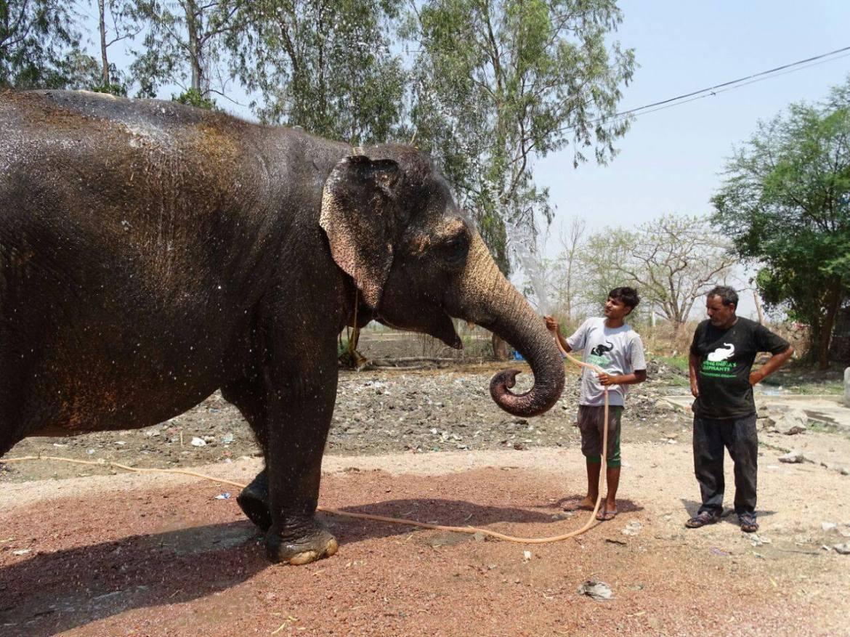 Rhea the elephant (3)