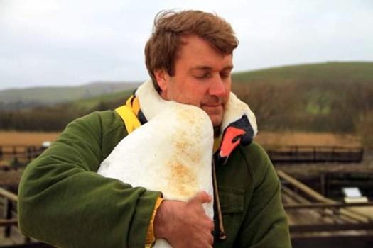 swan hugs man 2