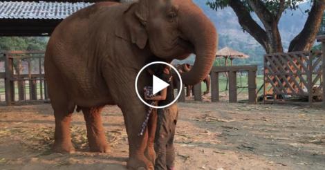 elephant-lullaby-1