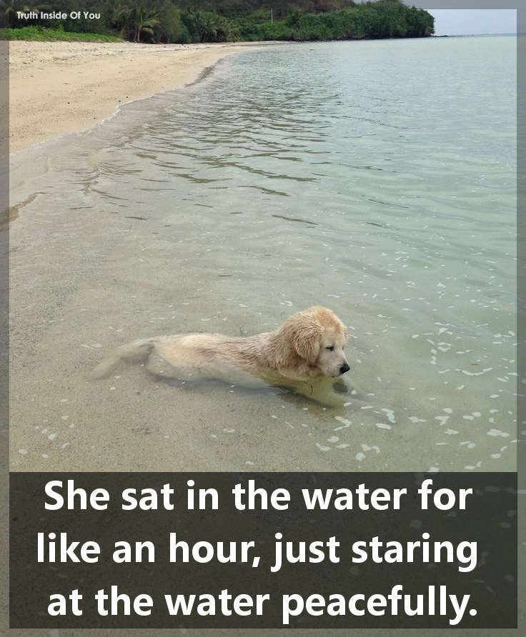 She sat in the water for like an hour, just staring at the water peacefully...