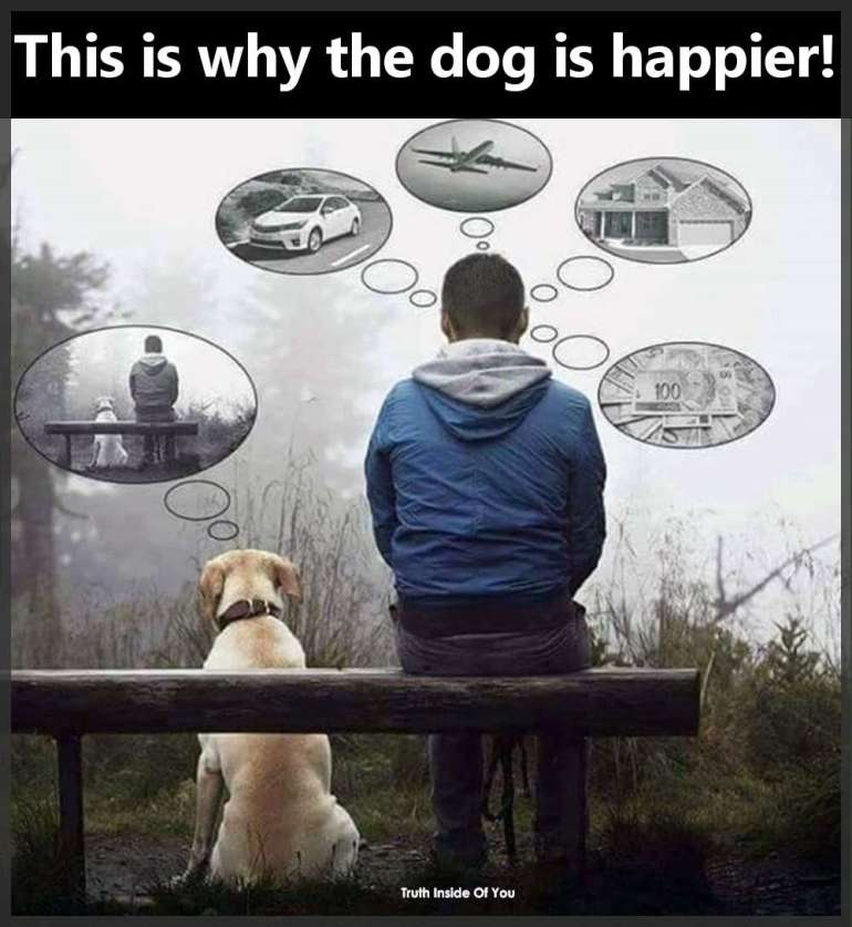 This is why the dog is happier!