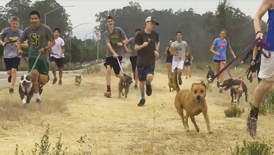 Cross-Country Team Takes Lonely Shelter Dogs On Their Morning Runs