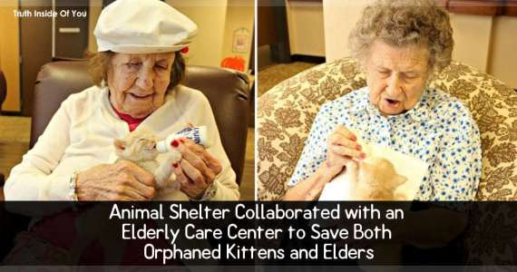 Animal Shelter Collaborated with an Elderly Care Center to Save Both Orphaned Kittens and Elders