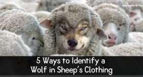 5 Ways to Identify a Wolf in Sheep's Clothing.jpg