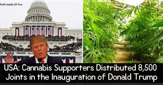 USA: Cannabis Supporters Distributed 8,500 Joints in the Inauguration of Donald Trump