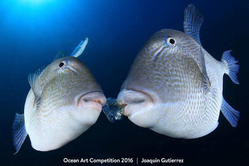 Τhese Beautiful Underwater Photographies Will Make You Want to Be a Diver.2