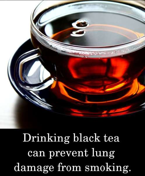 Drinking black tea can prevent lung damage from smoking.