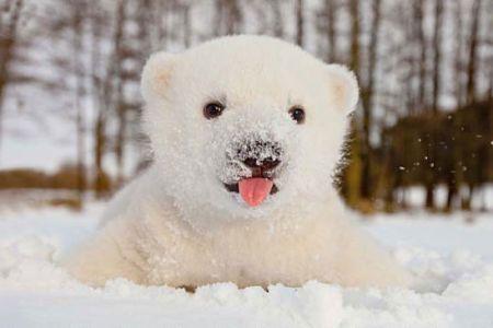 2. Polar Bear