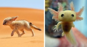 20 Beautiful Baby Animals You've Probably Never Seen