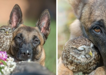 These 30+ Photos Of Ingo The Dog And His Owl Friends Is The Only Thing You Need To See Today