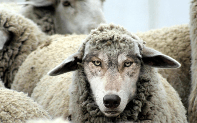 Shepherds, Pastors, and Wolves