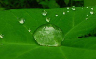 Droplet on Leaf by Easa Shamlh