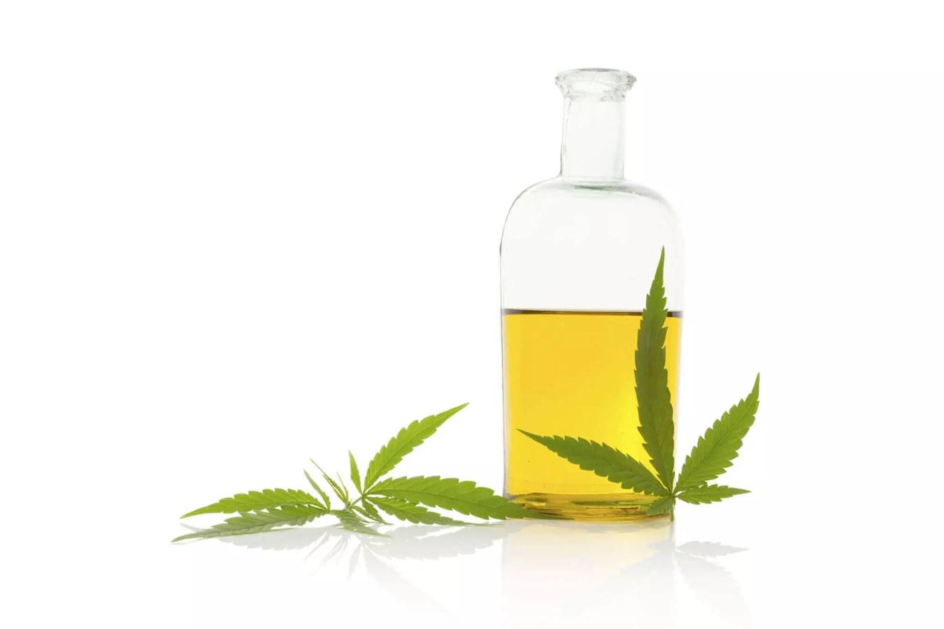 oil and hemp plant
