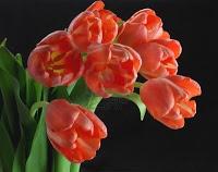 Blooming Bloom