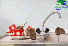 دعاء لطرد الفئران, دعاء وآيات لطرد الفئران من المنزل, شركة المركز العالمي