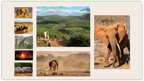 Safari Tsavo Est Kenya