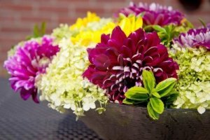 Heirloon Dahlias - long lasting and colourful