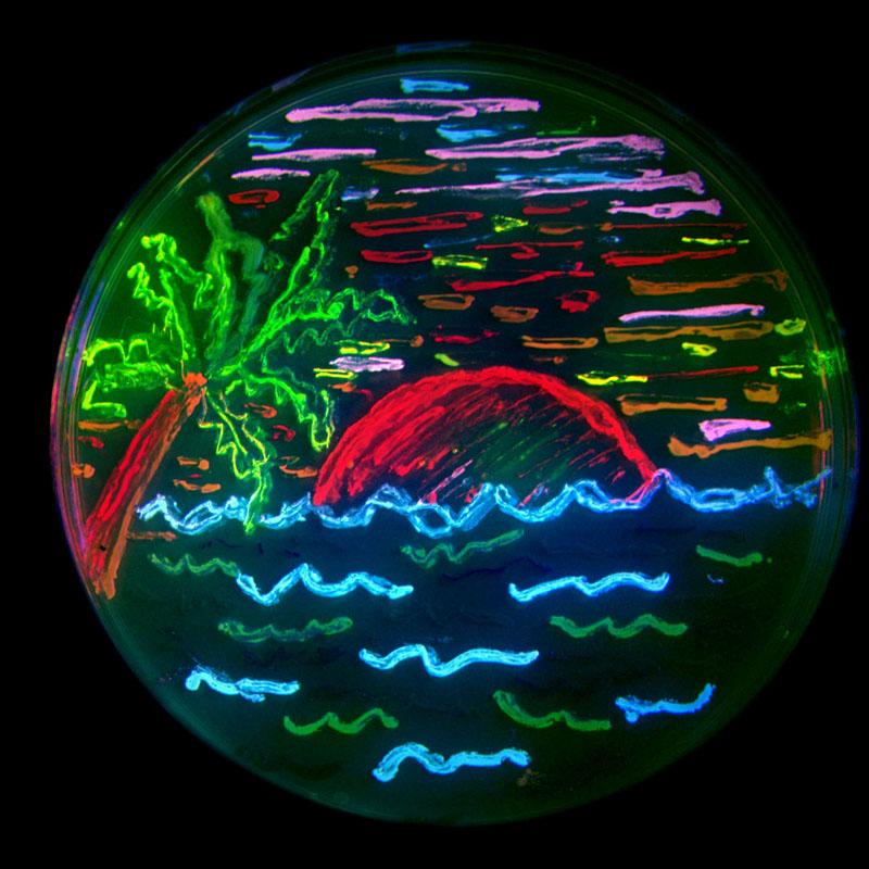 imagen hecha con las proteinas