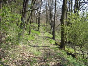prochazka-lesem