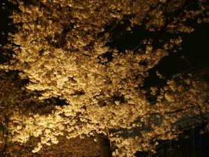 桜の森の満開の下にオヤジさんを想う [デ]