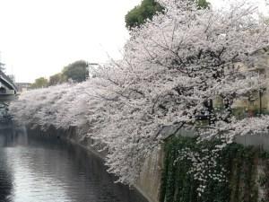 お花見 & 墓参りランラン18km [日刊たち vol.155]