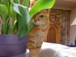 家のかぎ紛失と愛猫クリちゃんの旅立ち