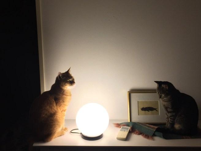 今週のソルとルナ [ネコ]