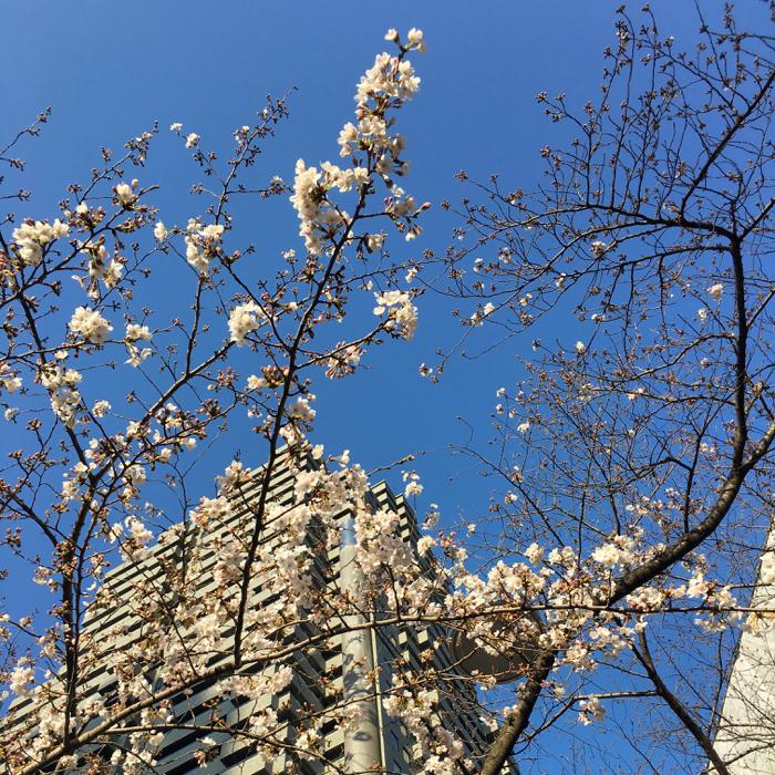 やっぱり朝がイイ! ビブラム履いて桜並木を  6kmラン!! [ランログ]