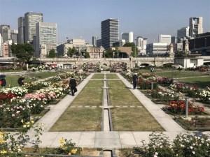 中之島公園のバラ園の見ごろは5月中旬〜下旬! 早朝ランがあまりにも美しかった!! [大阪スポット]