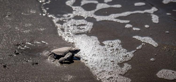 Nicaragua © Darlene Hildebrandt