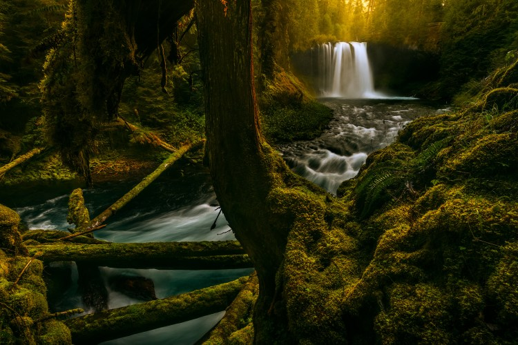 On the last day of my recent waterfall photography expedition with my friend Kane, we stopped at Koosah Falls at sunrise. The beautiful soft morning light was beaming through the tips of the trees behind us, lighting up the mist created by this powerful 64 ft. waterfall on the McKenzie River. Koosah Falls is located in Lane County, Central Oregon right off of Highway 126 near Sisters.