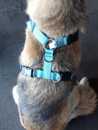 The back of the Tellington TTouch Harmony Dog Harness.